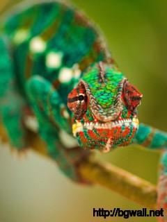 cute-chameleon-wallpaper-for-mobile