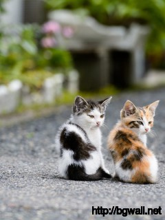 cute-couple-kitten-cat-wallpaper-widescreen-hd