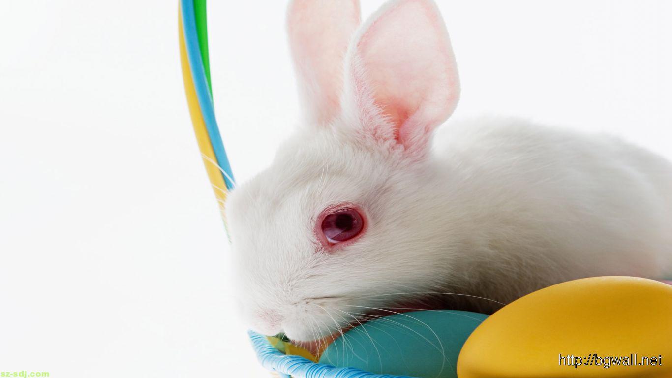 cute-easter-bunny-2014-wallpaper