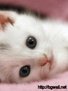 cute-kitten-cat-cant-sleep-today-wallpaper-background