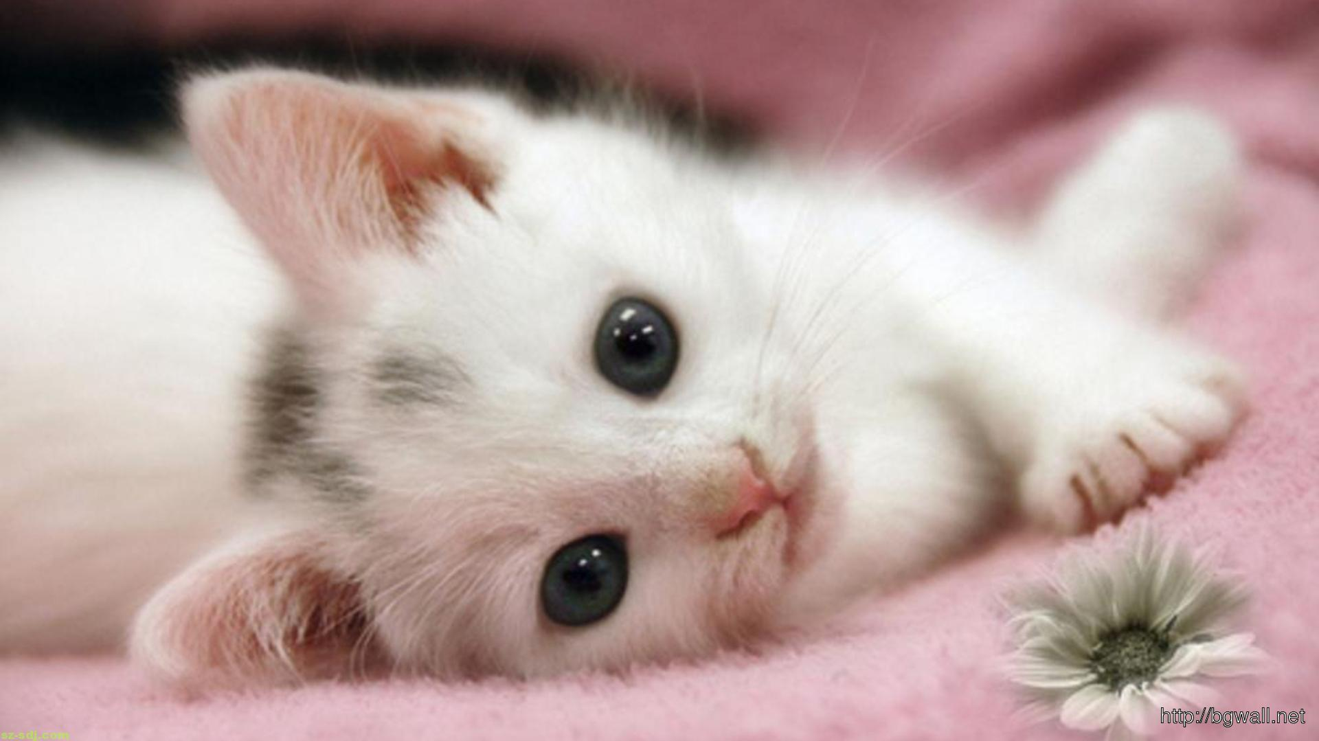 A cute cat sleep with her bunny wallpaper image widescreen - Baby kitten backgrounds ...