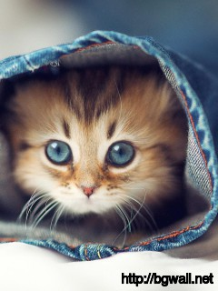 cute-kitten-hd-wallpaper-picture