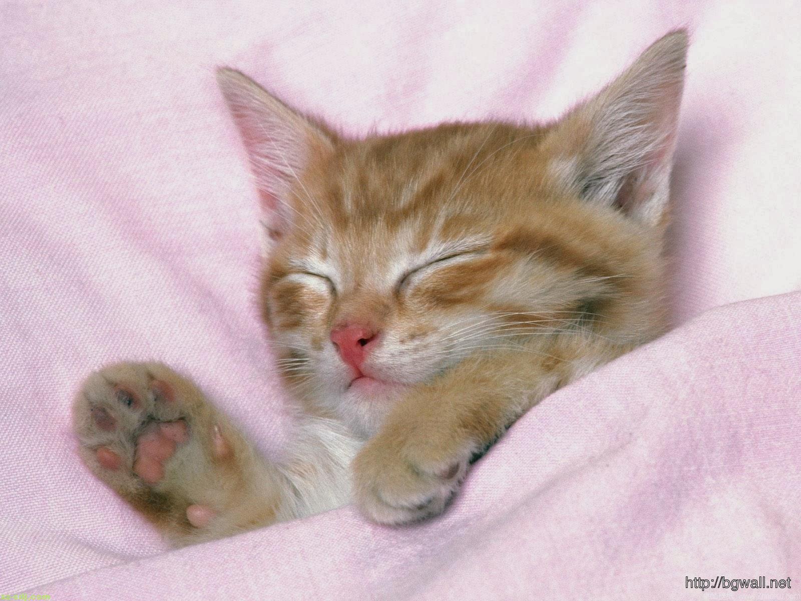 cute-kitten-sleep-on-pink-bed-wallpaper-pc-high-definition