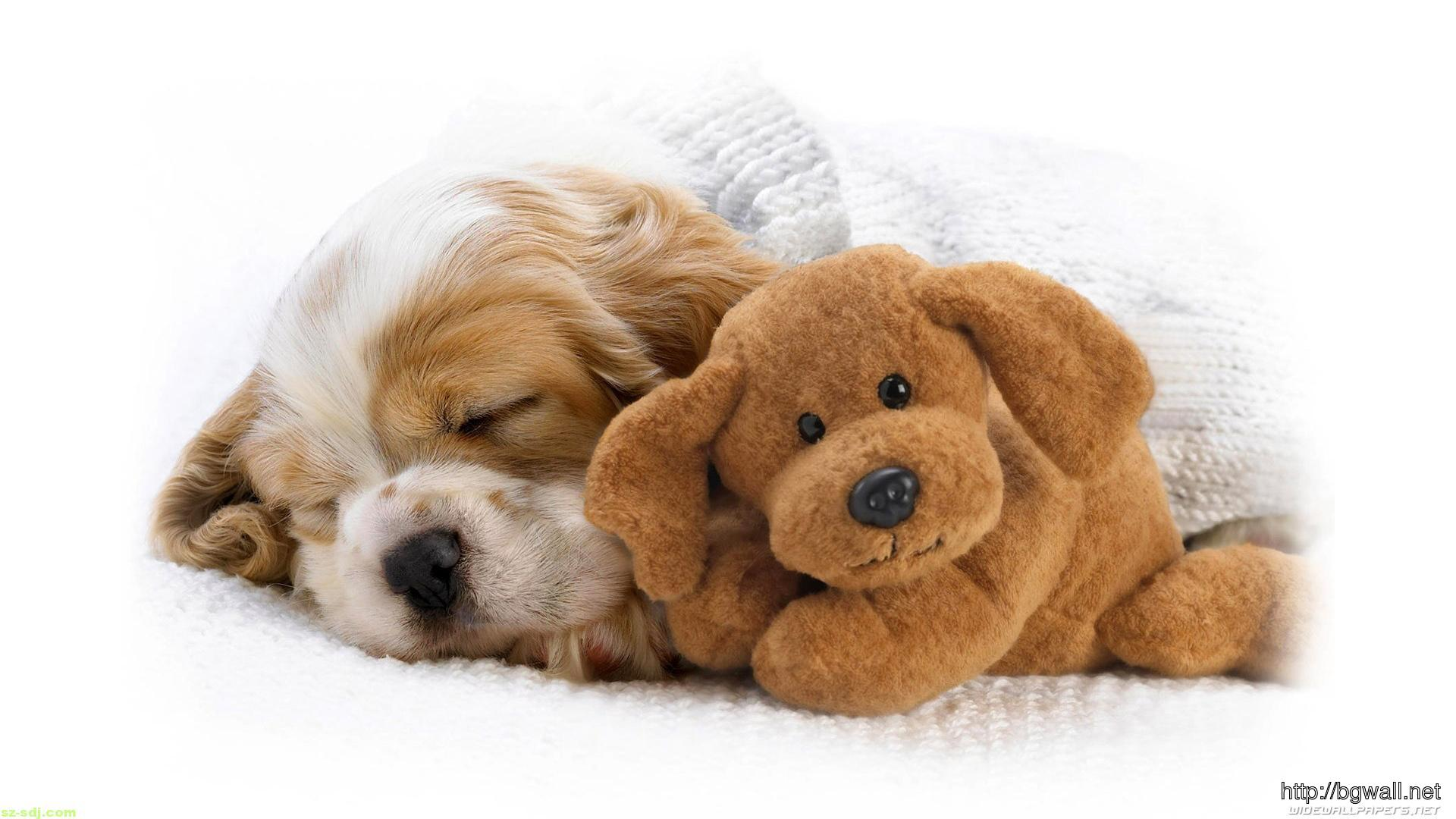 cute-puppies-sleep-with-brown-doll-wallpaper-hd