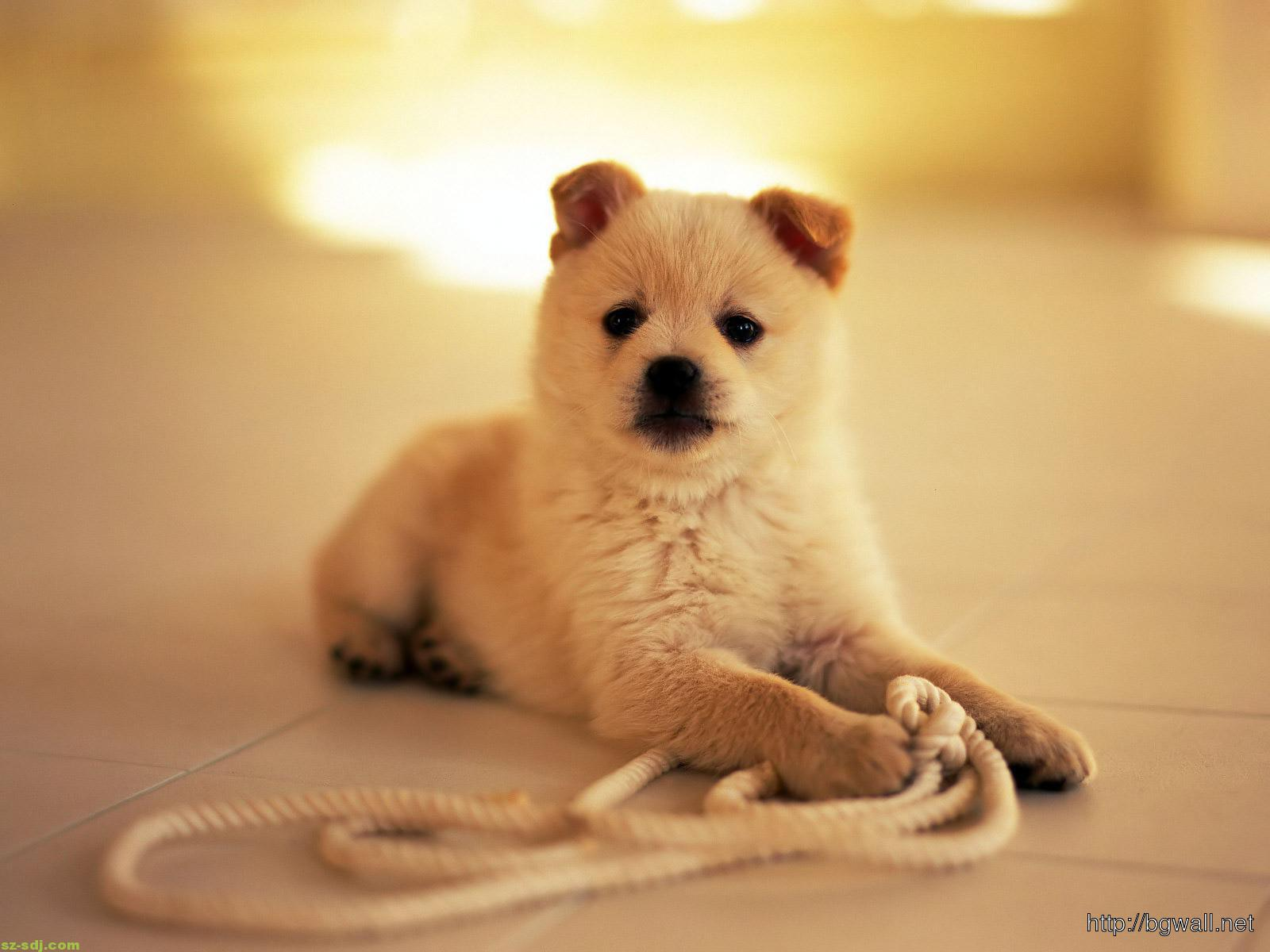 cute-small-pets-wallpaper