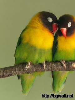 cute-two-birds-romantic-wallpaper