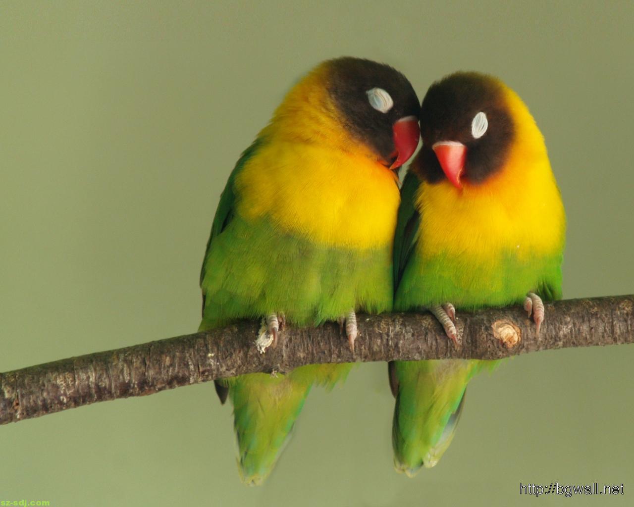 cute-two-birds-romantic-wallpaper