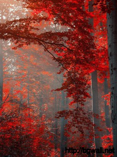 dark-forest-red-autumn-wallpaper-desktop