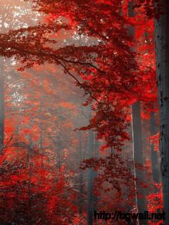 dark-forest-red-autumn-wallpaper-desktop