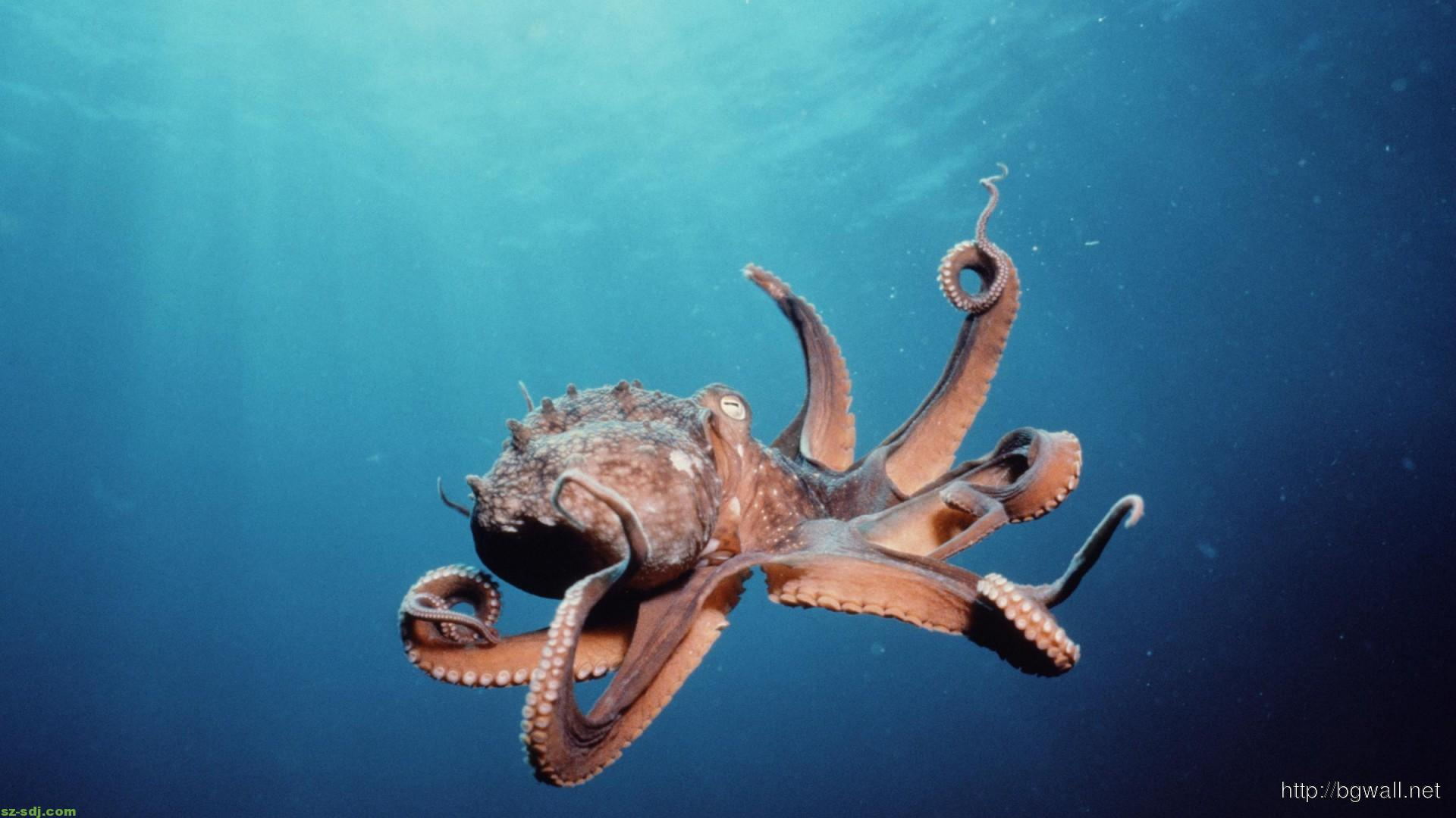 Octopus Car Game