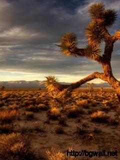 desert-with-cactus-plant-wallpaper-widescreen