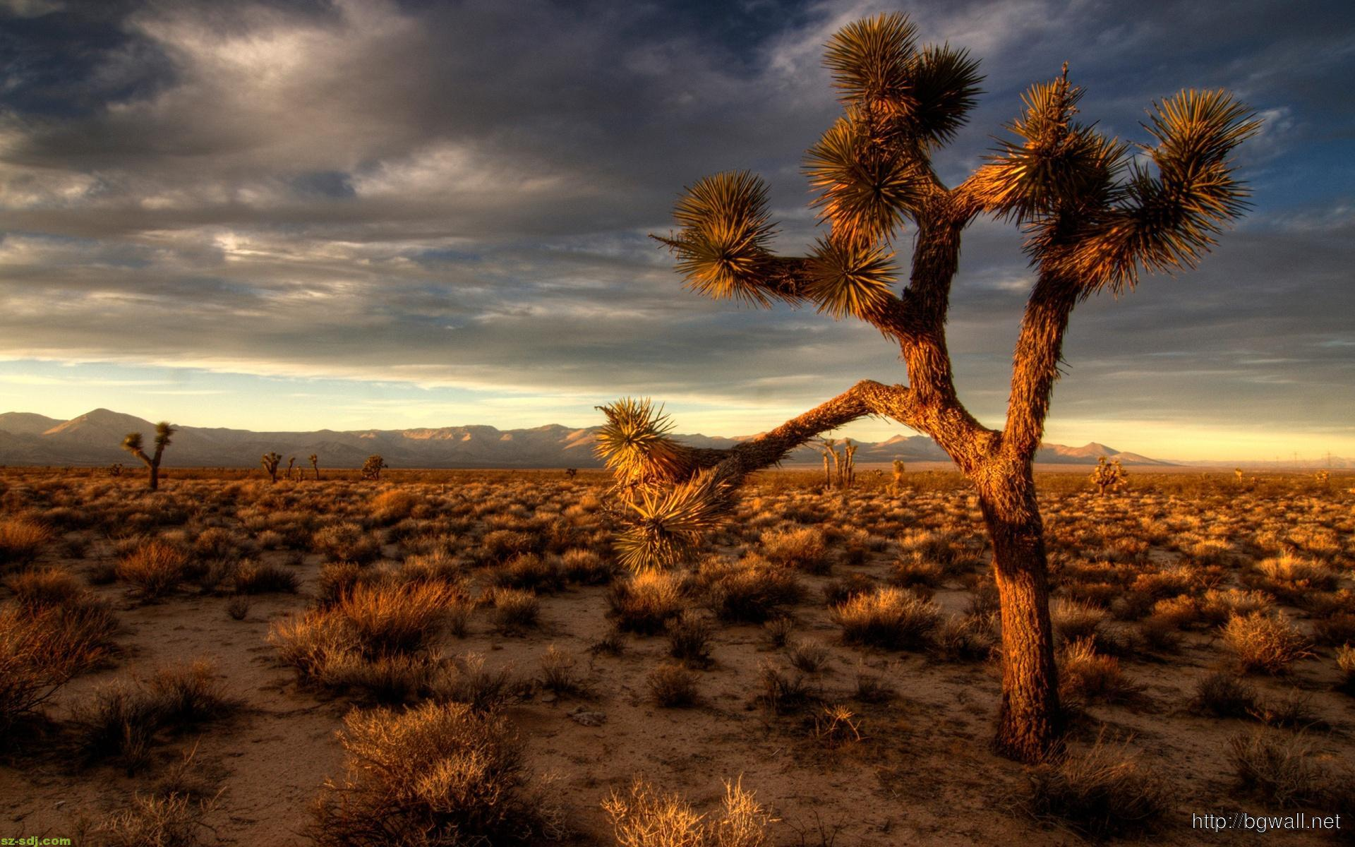 Desert With Cactus Plant Wallpaper Widescreen