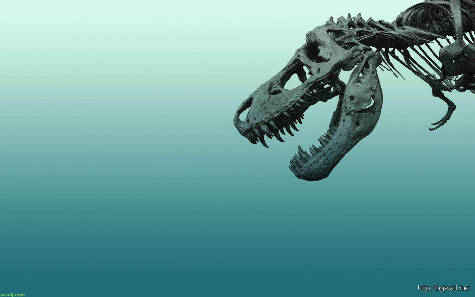 Dinosaurs Skelton Wallpaper Widescreen Hd