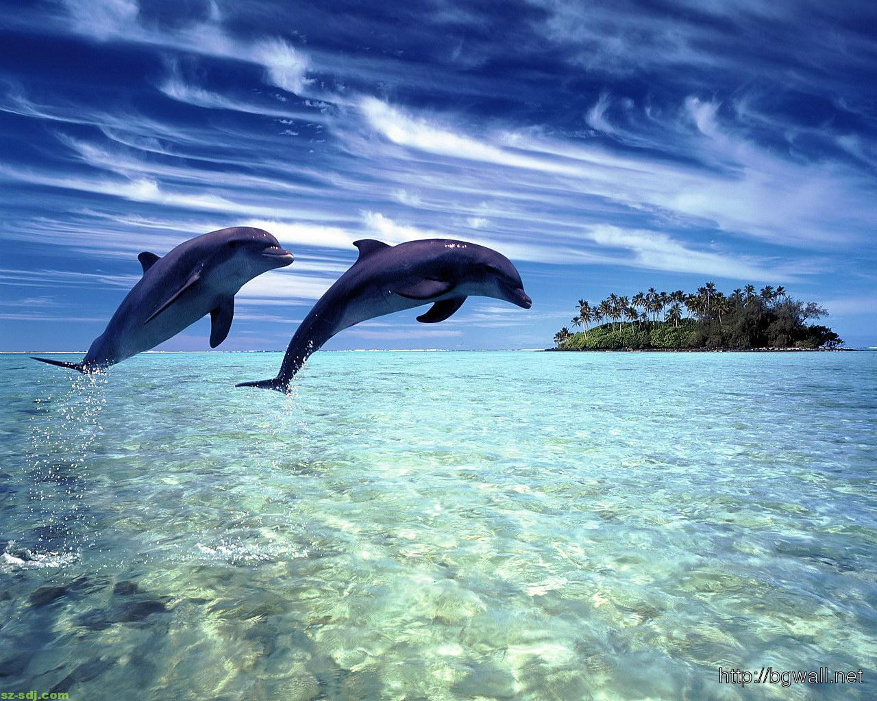 dolphin-in-fresh-water-wallpaper-hd