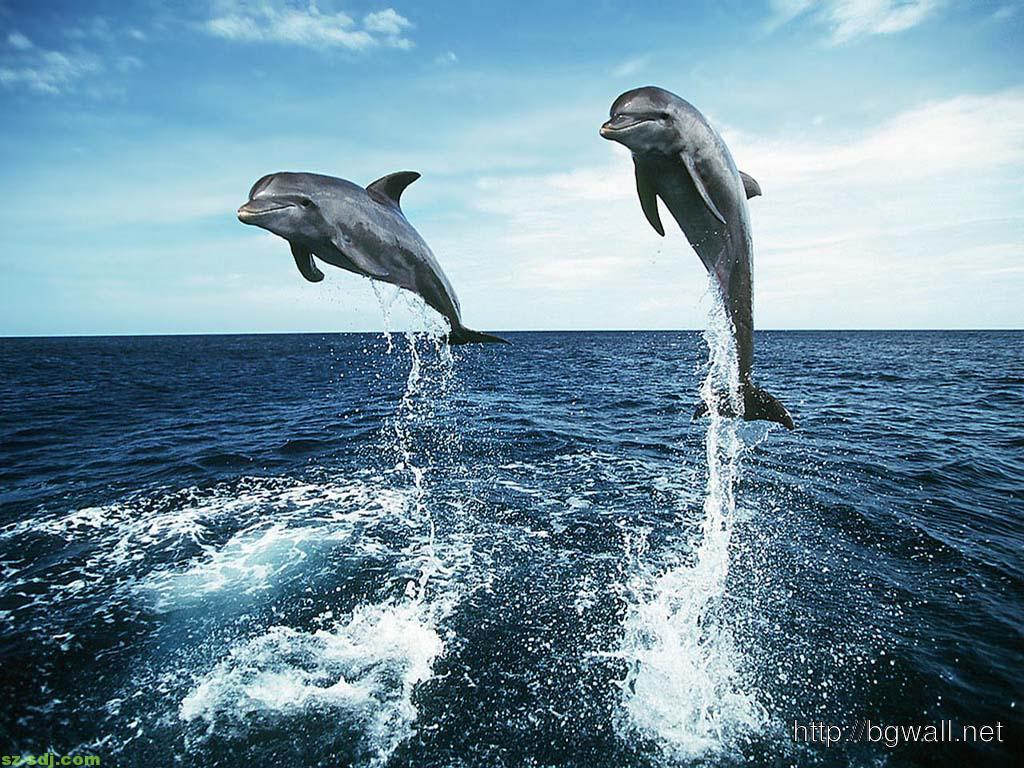 Dolphin Wallpaper For Desktop