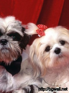 fake-puppies-looks-like-real-puppies-wallpaper-cute