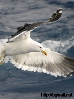 flaying-seagull-wallpaper-hd