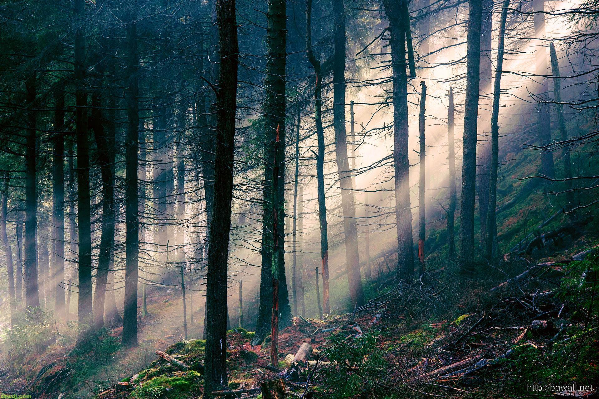 forest-ray-of-light-desktop-wallpaper