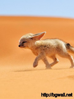 fox-desert-wallpaper-high-resolution