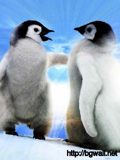 friendship-penguins-wallpaper-free