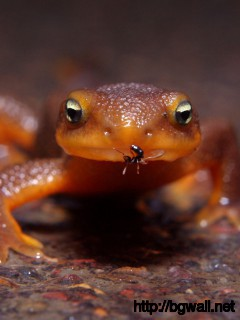 frog-and-ant-animals-wallpaper