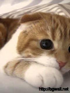 funny-scared-cat-hidding-behind-bed-sheet-wallpaper