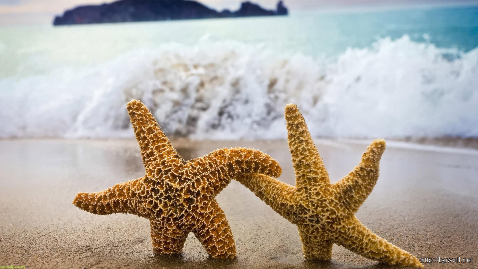 funny-star-fish-desktop-wallpaper