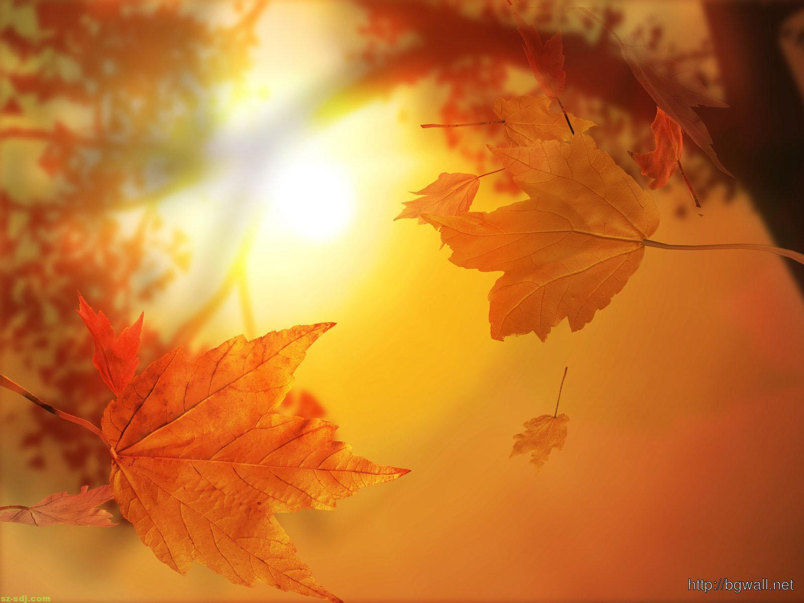 golden-leaf-desktop-wallpaper