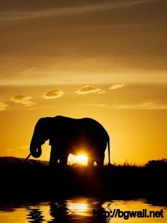 golden-sunset-with-two-elephants-wallpaper