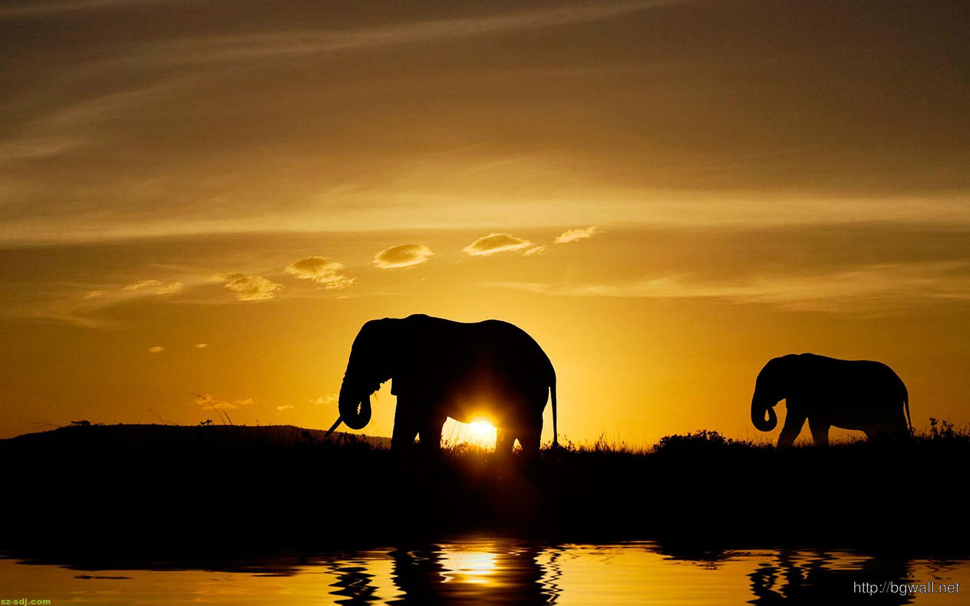 Golden Sunset With Two Elephants Wallpaper