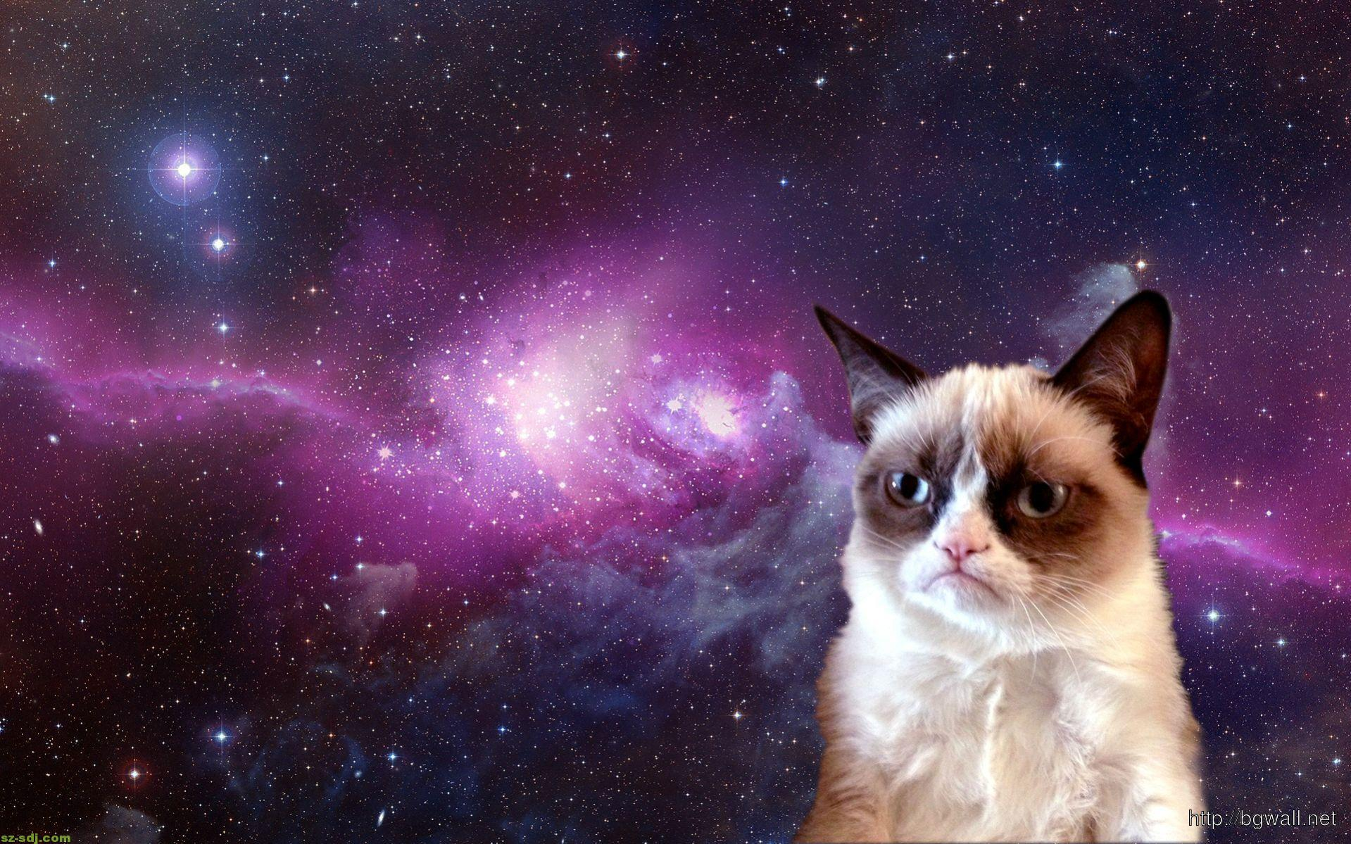Grumpy Cat At Space Images Wallpaper Pc Desktop