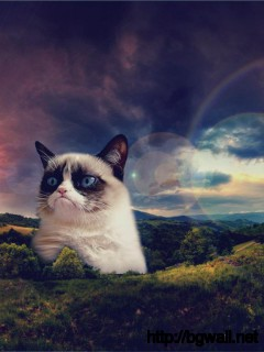 grumpy-cat-become-hill-image-desktop-wallpaper-mac