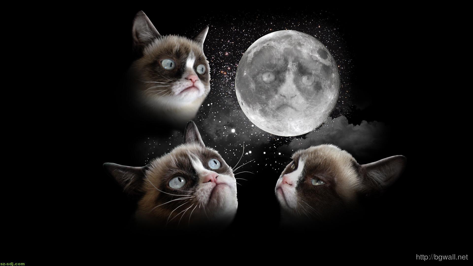 grumpy-cat-dreaming-to-the-grumpy-moon-wallpaper-pc