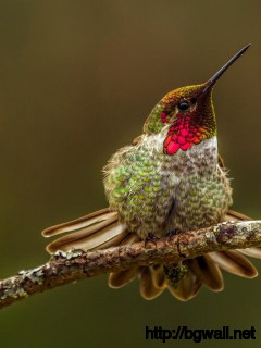 hummingbird-on-brown-background-wallpaper-